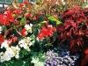 union-flowers