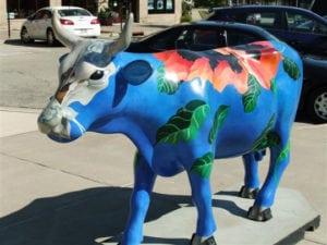Sun Prairie WI Cow