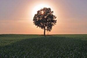 Tree blocking the sun at sunset